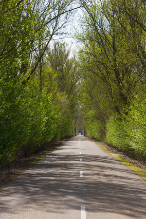 poplar  banks: Nice country road with arch formed by trees. Enjoyment of traveling in spring, between sun and shade. Leon. Spain