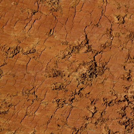 flattened: Texture or background flattened and cracked clay earth
