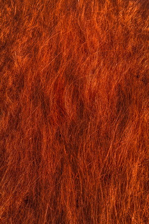 coppery: Sfondo o la trama di erba secca, con effetto filtro in rossastro, ramato o rosso