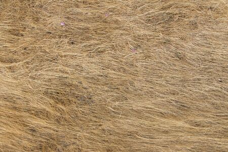 dry grass: Background or texture of dry grass  yellow