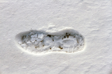 recent: Detail recent footprint tread shoe or boot in the snow