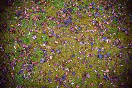 Por lo general césped mojado cubierto con hojas de color marrón que cae en invierno los árboles con la ilustración oscura
