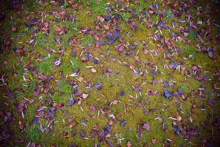 I usually wet grass covered with brown leaves falling trees winter with dark vignette