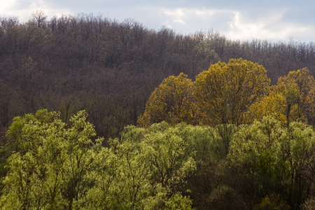 willows: Shades of green, yellow and brown trees willows and oaks in early spring