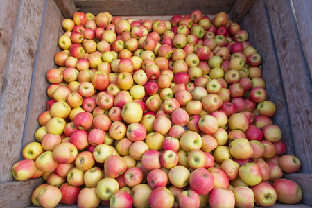 wooden crate: Apples bulk market, stuck in a wooden crate