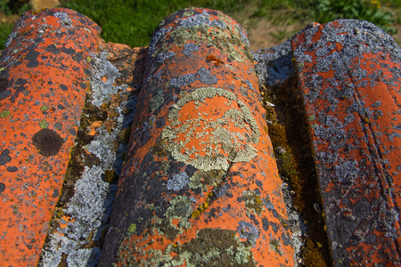 mosses: Old tiles detail wavy eaves, full of lichens and mosses Stock Photo