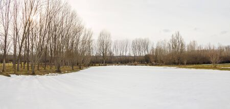 poplars: Panoramic composition Meadow with traces of snow in winter. The Sun Breaking Through a corner Among leafless poplars