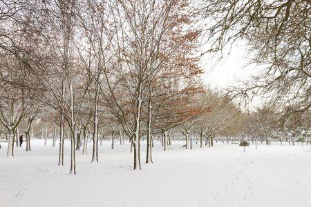 Stadtpark oder grünen Gegend im Winter. Der Boden und die Bäume voller Schnee