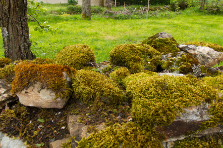mosses: Boundary stone wall full of mosses in rural area Stock Photo