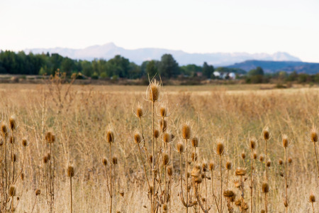 thorn tip: Line dry thistle With blurred background scenery and mountains in the background