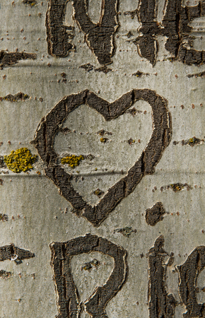 bark carving: Heart Engraved on the bark of a tree