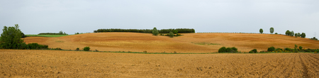 recently: Recently Plowed Farmland Panorama - Panoramic view of agricultural land recently plowed and prepared for cultivation. With ocher and brown. With some scattered tree and a plantation of young pin on the ridge