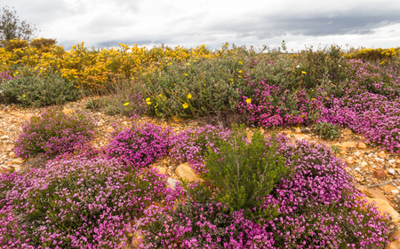 heather: Heather and flowering shrubs in pink or mauve and yellow