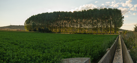 medicago: Irrigation Canal With Alfalfa crops or trees grove at Sunset backlight background