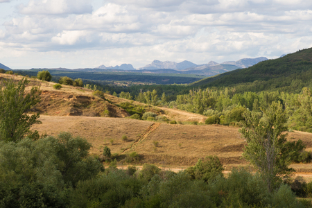 high visibility: Panoramic view of beautiful summer landscape with rolling forests of oaks, pines, poplars and willows. Wide visibility That reveals the background mountains
