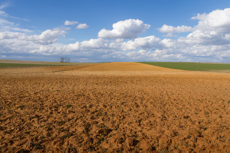 Landscape with plowed fallow land and cereal crops recently. A sunny day cottony clouds With