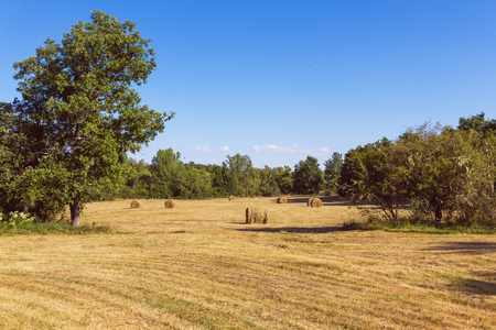 Field or meadow in summer, surrounded by trees, with dry grass mowed and baled freshly