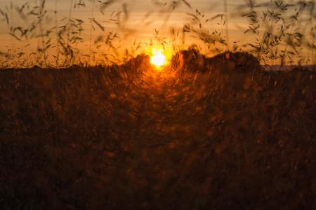 Sunset Between Wild Herbs