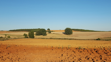 Panoramic view of agricultural land recently plowed and prepared for cultivation. With ocher and brown. With some scattered tree on the ridge