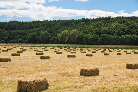 Meadow with mowed grass and stored in bales or rectangular on the side of oaks forest Stock Photo
