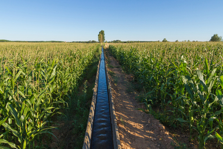 Water irrigation canal between fields with corn Stock fotó
