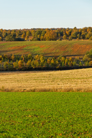 Autumn landscape with cultivated lands in the foreground and groves, oak and pine forests