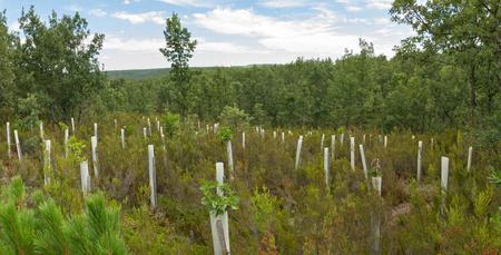 성장하는 동물과 나쁜 날씨를위한 온실과 오크 숲 보호 튜브에 나무 심기 스톡 콘텐츠