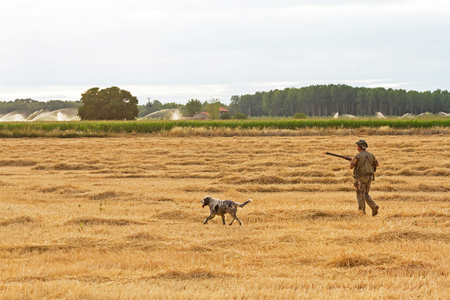 Shotgun Hunter hunting with dog on land of cereals and harvested cornfield