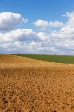 Landscape with fallow land recently plowed and cereal crops. A sunny day with cottony clouds