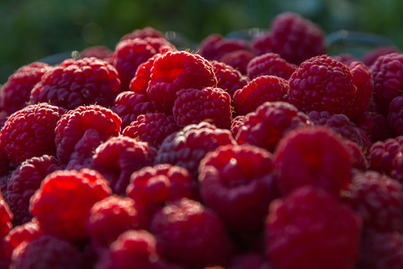 Fresh and natural raspberries outdoors Reklamní fotografie