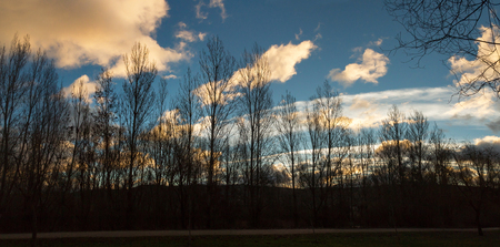 Panoramic view of Winter poplar trees, backlit, with background of sky with clouds at dawn