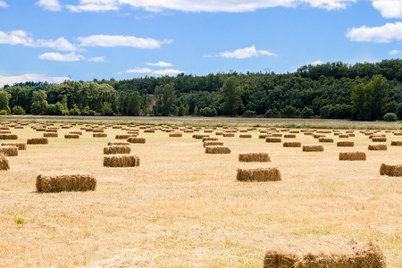 Meadow with mowed grass and stored in bales or rectangular on the side of oaks forest 스톡 콘텐츠