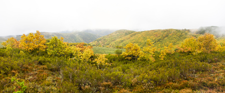 Panoramic view of Autumn landscape with Hills and Oak Forests among fog and low clouds and heathers in the foreground 스톡 콘텐츠