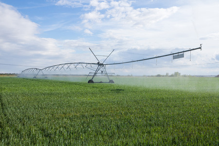 Structure irrigation system self propelled mobile Spray (pivot) in cereal field