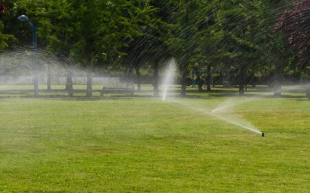 Sprinkler irrigation of green grass of a park with trees in the early hours of the morning and spring Imagens