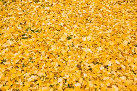 Background or texture fallen leaves of autumn with color photographic treatment