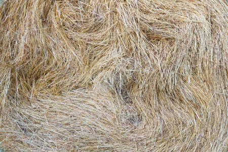 Background or texture of dried grass stacked in bale