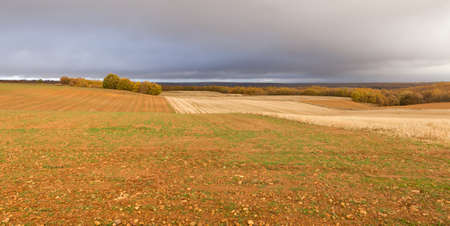 Warm autumn landscape of arable land plowed for cultivation and sown cereal, with autumnal grove and distant horizon with oak forest. With warm sunlight on a stormy day