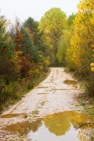 Dirt road, with puddles of water by the rain, between varied Grove Fall