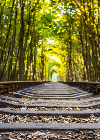 natural love: Tunnel of love - railroad tunnel surrounded by green trees, created by trees and passing train