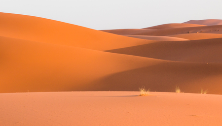 curved waves of dunes in Sahara desert in Morocco