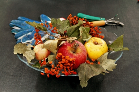 three apples, dried bunches of rowan, garden tools and gloves