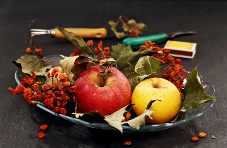 apples, dried leaves and rowan berries in a glass vase, garden insrementy on a dark surface