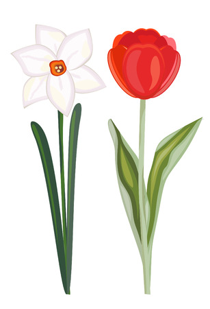 Narcissus and tulip Stock Vector - 6553496