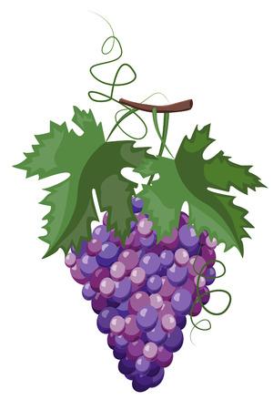 Branche de raisins Vecteurs