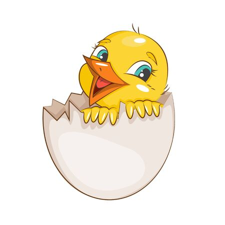 chicken and egg: Cute little chicken hatched from egg. Vector isolated on white