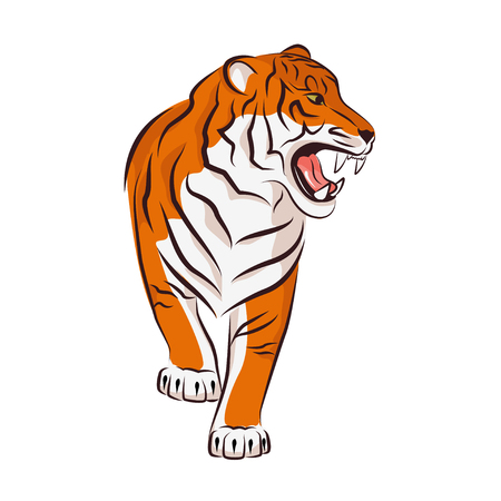 Angry tiger.  Vector illustration isolated on white background. Illustration