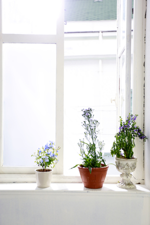 antique vase: three violet flowers put on the conner of window