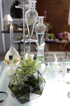 a geometric glass terrarium that carry the fern and moss inside put in a genetic laboratory
