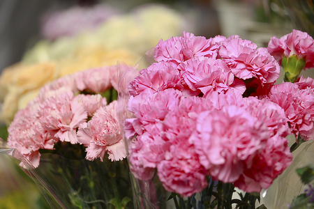 sell: two tone of pink carnation bouquet in sidewalk florist